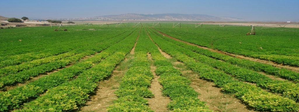 Asaja Campaña Agraria Huertos