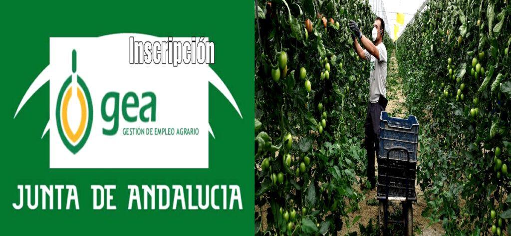 Empleo Gea Junta Andalucia Logo