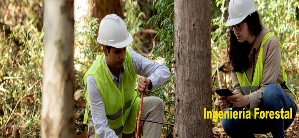 Empleo Ingeniero Tecnico Forestal