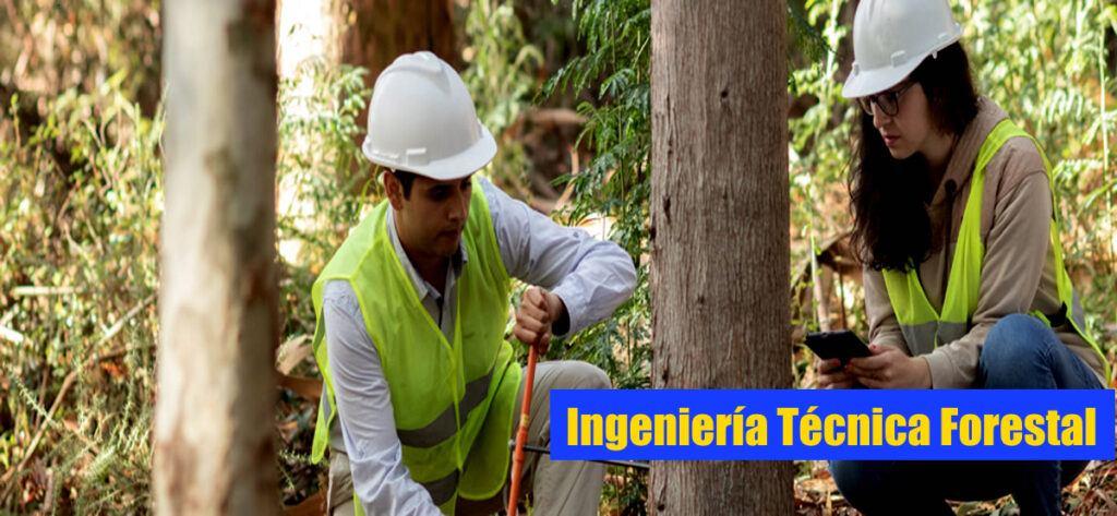 Empleo Ingeniero Tecnico Forestal5