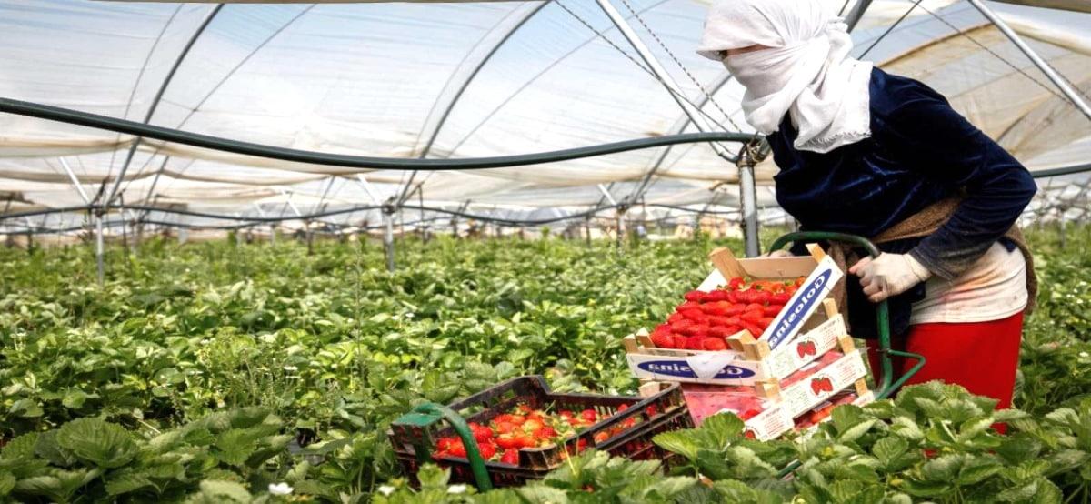 Empleo Peones del Campo - 50 nuevas plazas para Peón Agrario
