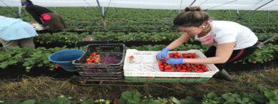 Empleo Trabajadores Agrícolas Frutales