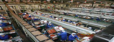 Empleo Vicasol almacenistas 390x146 - Nueva sede Cooperativa Vicasol abre oferta para 900 empleos
