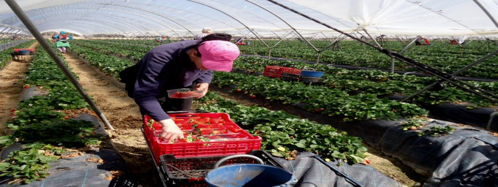 Empleo Agricultor Campaña Agricola Del Campo Valenciano1