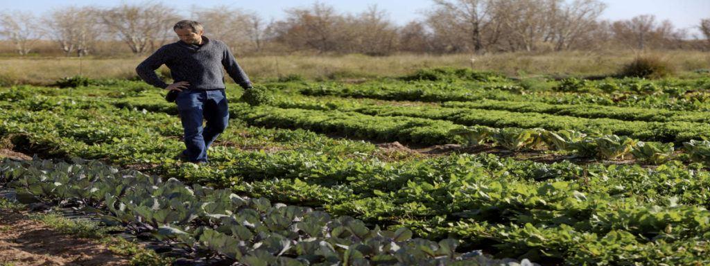 Empleo Sector Agrario Andalucía