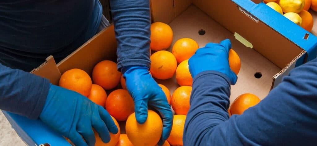 envasar naranjas trabajo