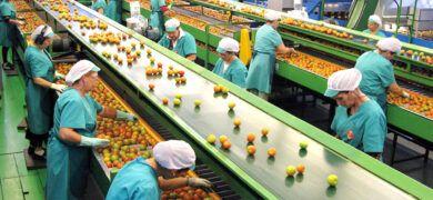 Recogida Fruta Fabrica Murcia